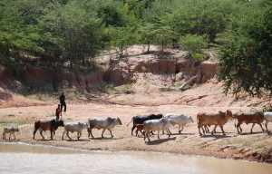 7a Futter und Wasser werden in kilometer langen Fussmärschen erreicht