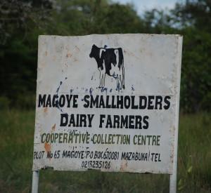 8 Milchbauern bringen ihre Milch in Milcherfassungsstellen
